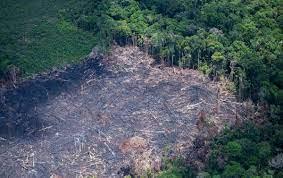 Desmatamento de junho de 2021 confirma pior semestre na Amazônia desde 2016