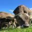 Empresa mineira lança leite vegetal equivalente ao leite de vaca em nutrição, além de ser mais sustentável
