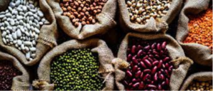 Conab prevê produção de grãos em 254 milhões de toneladas impactada por clima adverso