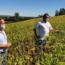 Projeto estimula a produção de soja no Centro-Oeste de Minas