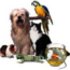 Setor pet cresceu durante 2020 no mundo todo - Instituto Pet Brasil informa ranking mundial atualizado
