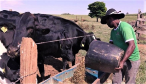 Alta de custos de produção preocupa produtores de leite