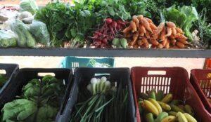 Clima prejudica oferta de hortaliças e frutas no país segundo Boletim Prohort da Conab